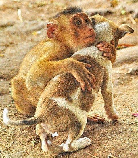 drole-coupe-singe