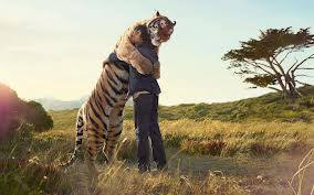 drole-couple-tigre