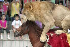 drole-de-couple-cheval-lion