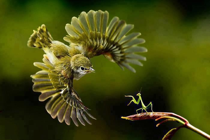 droles-couples-oiseau