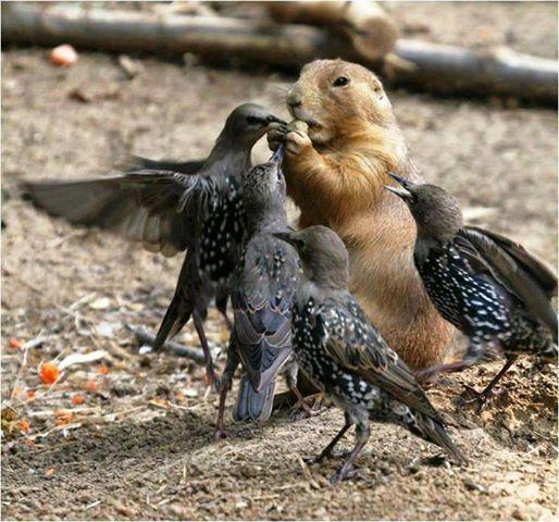 ecureuil-oiseaux