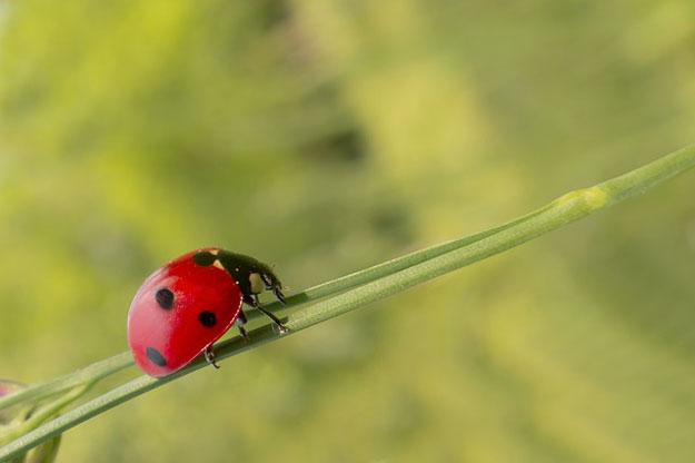 Lutte biologique les petites b tes et insectes utiles - La lutte biologique au jardin ...