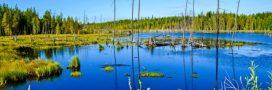 Les marais, zones d'équilibre de la planète