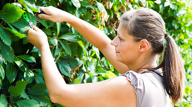 tailler les haies automne jardinage