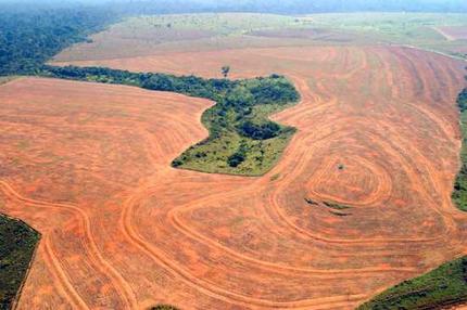 FSC est un rempart contre les exploitations non valorisantes des forêts.