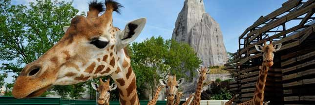 Je parraine un animal du Parc zoologique de Paris