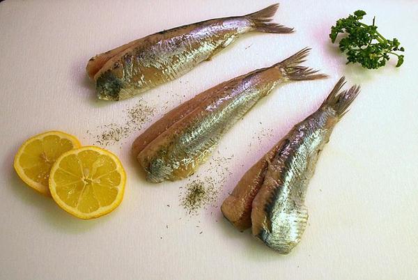 hareng-poisson-gras