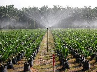 huile-palme-OGM