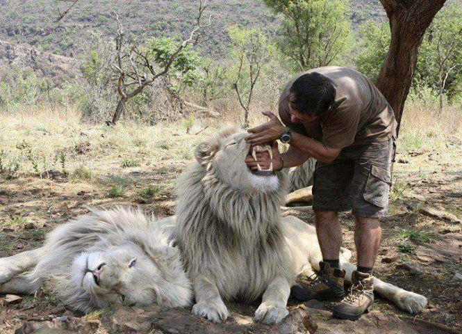 lion-entretien-dents