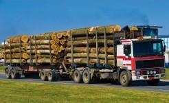 Plus de 700 entreprises dans 60 pays adhèrent aux principes de fonctionnement du FSC, produisant ou achetant du bois certifié.