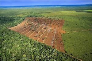 Déforestation forêt Amazonienne
