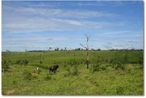 Disparition forêts tropicales