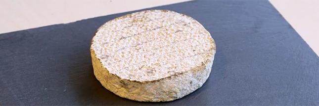 Locavore jusqu'au bout : du fromage à partir de bactéries du nez