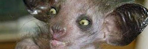 Et l'animal le plus moche du monde est ....
