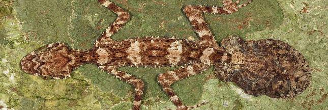 10 nouvelles espèces découvertes