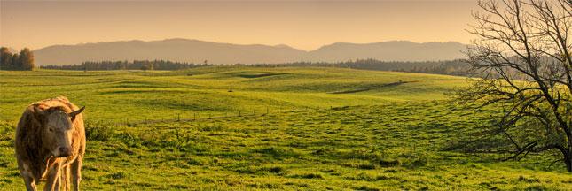 Les enjeux d'une agriculture productive pour l'Europe