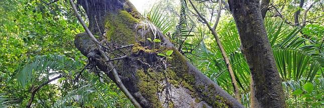 L'Amazonie, le coffre-fort de la biodiversité en danger ?