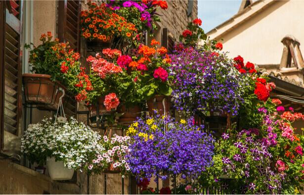 balcon biodiversité