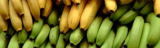 bananes chlordecone