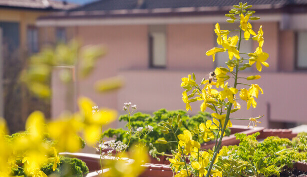biodiversité balcon