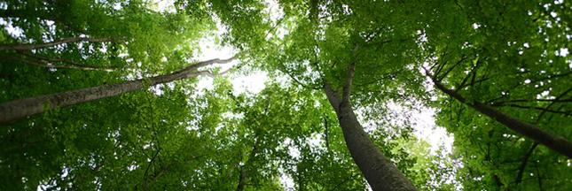 Les vieux arbres, alliés de l'environnement
