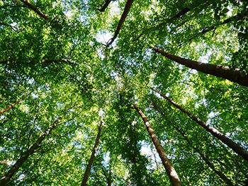 foret-arbres-arbre-02