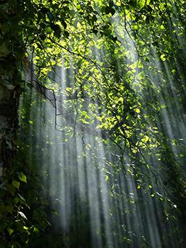 foret-arbres-arbre