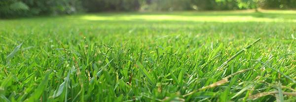 herbe-jardin-large