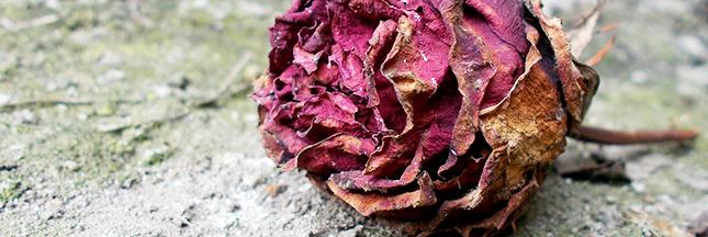 Jardinage : en août, enlevez les fleurs fanées