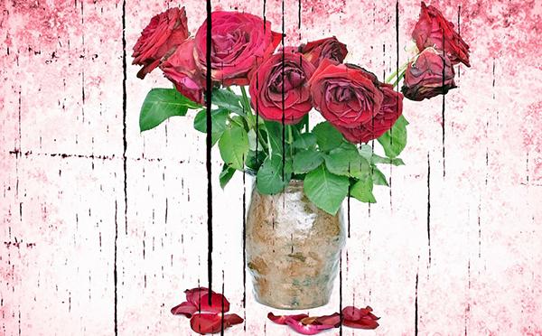 rose-fleurs-fanees-jardin-bio-01