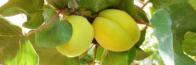 D couvrez les fruits et l gumes de saison en juin les fromages et les viandes - Fruit de saison juin ...