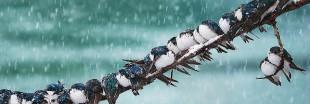 Diaporama: les animaux sous la neige