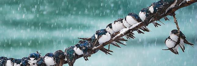 Diaporama : les animaux sous la neige