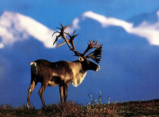 tourisme communautaire caribou