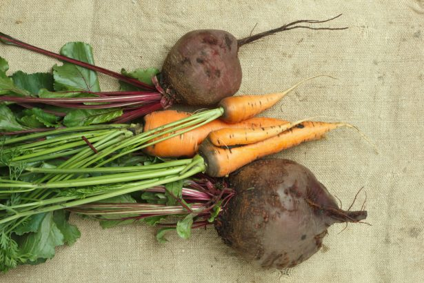 la carotte sucre