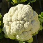 Légumes d'hiver et de santé