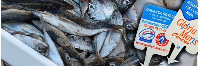 Où en est la fraude à l'étiquetage du poisson en France ?