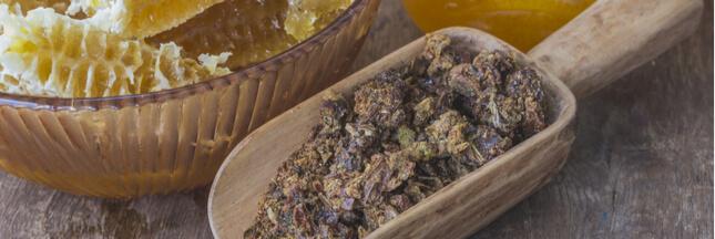 La propolis, reine des produits de la ruche