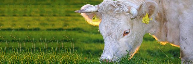 La viande bio peut-elle faire la différence ?