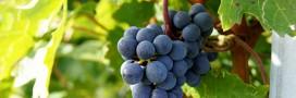 Épandage de pesticides obligatoire: le viticulteur bio condamné