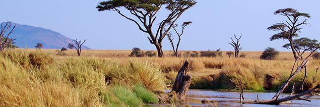 afrique-desert-tanzanie-serengeti