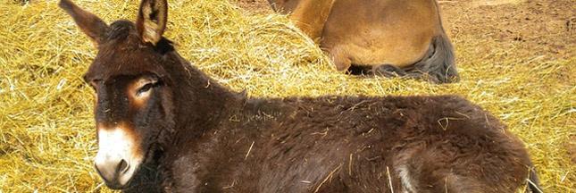 Un âne itinérant offre du courant électrique en Macédoine !