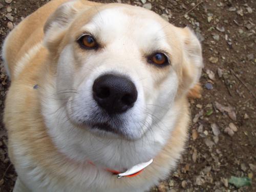 Une photo de chien qui regarde l'objectif