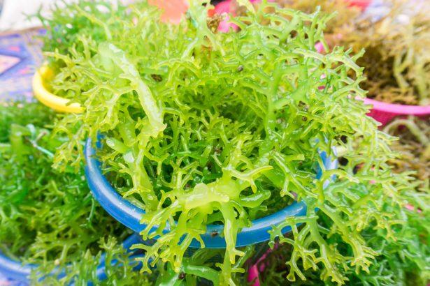 Et si cuisiner les algues tait bien plus savoureux que - Cuisiner les girolles fraiches ...