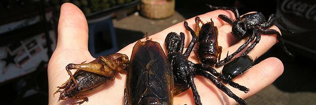 Entomophagie : à Angers, on va élever des insectes en masse