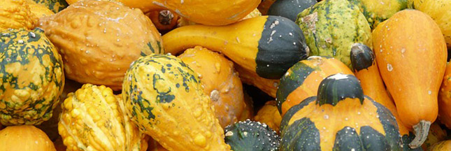 marche-vente-directe-producteurs-alimentation-courges-legumes-ban