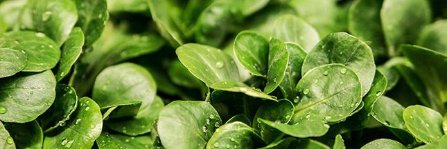 salade-mache-legumes-de-saison-mars-00-ban