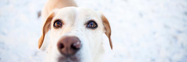 Le chien intelligent n'est pas un mythe, la preuve