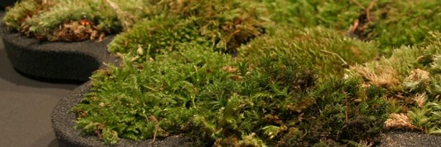 Tendance verte : le tapis de bain végétal