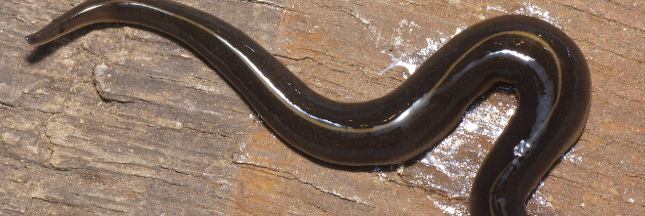 Les escargots et vers de terre peuvent-ils disparaître?